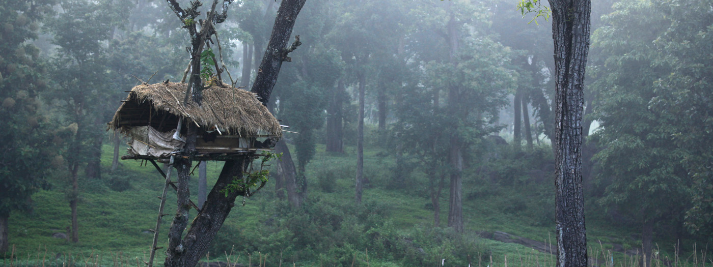 Wayanad Tour Package Itinerary